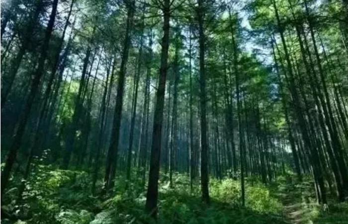 乡村旅游资源中的六种养生方式
