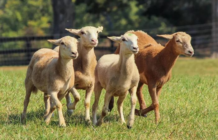 关于休闲农业,这20个流行概念必须了解!
