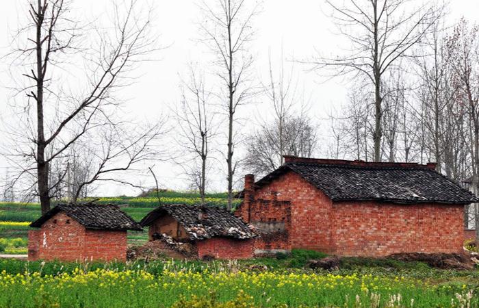 乡村振兴:中国农村改革40年的历程和成就