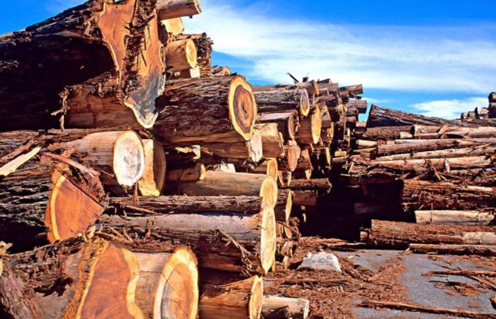 """""""民间工艺""""木雕工艺品的制作程序"""