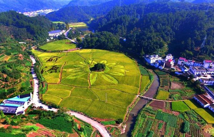 2019年中央八部委协力布署乡村振兴工作