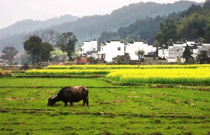 乡村振兴战略中如何重构乡村空间?