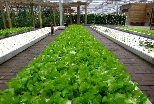 日本精致农业