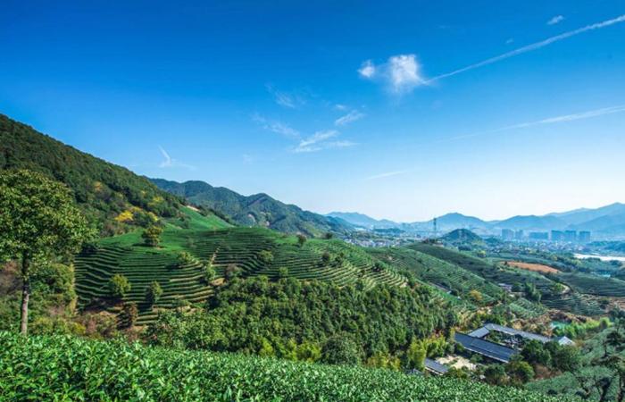 中国茶文化,如何打造成功的田园综合体?