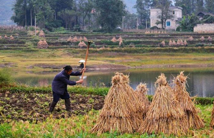 积极发展生态振兴,推进新农村建设!