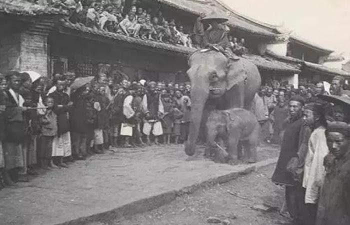 把大象关进冰箱需要几步?慈禧表示得先建个园子!