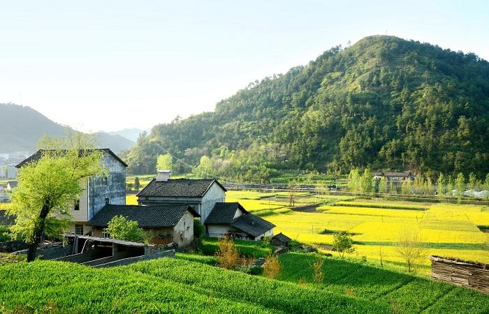 田园综合体规划设计实践与研究