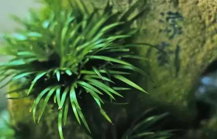 古代文人喜欢在室内放哪些植物?