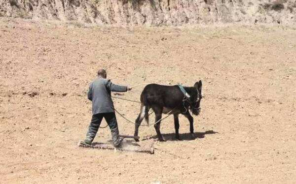 耧麦——即将消失农耕文化