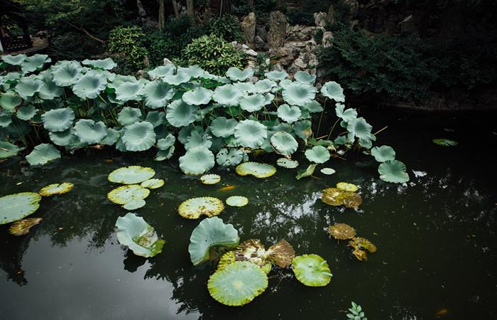 中式传统庭院中,为什么喜欢设计池子?