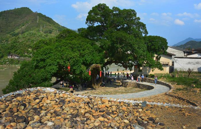 如何打造个性化、多元化的文化民宿村落?