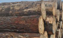 山东潍坊元林木业代理、合作
