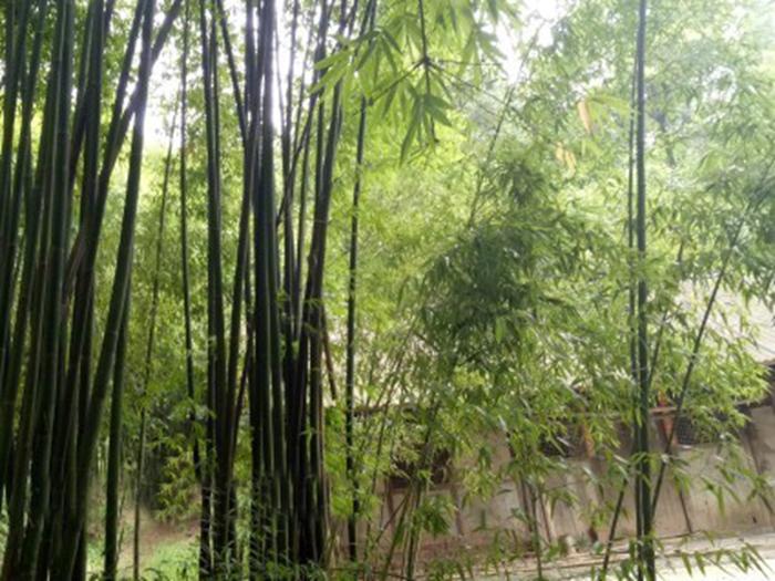 四川崇州白塔湖景区后山三亩幽雅农家院子55万转让
