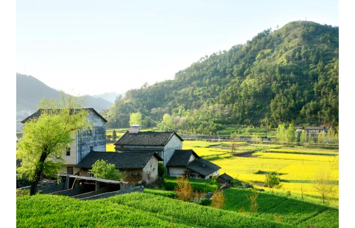 盘点2020年乡村产业的十大关键词