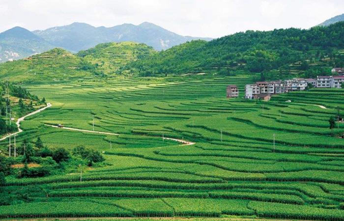 农业农村部印发《2020年农业农村绿色发展工作要点》的通知