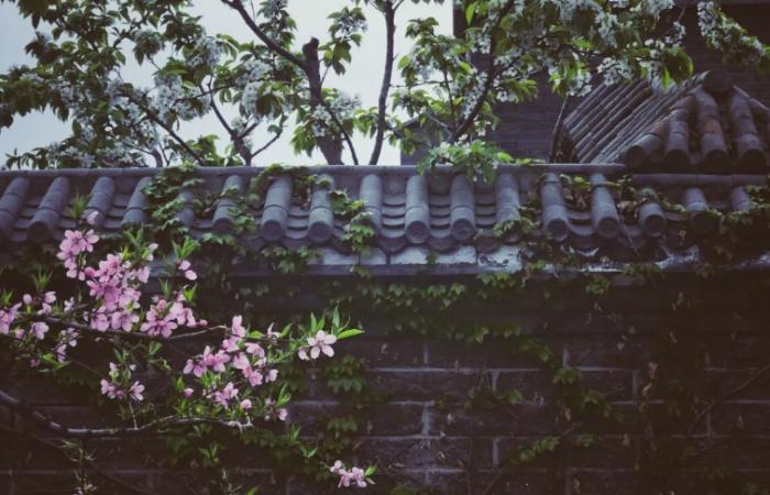中国式庭院,如何打理好自己的一方天地?