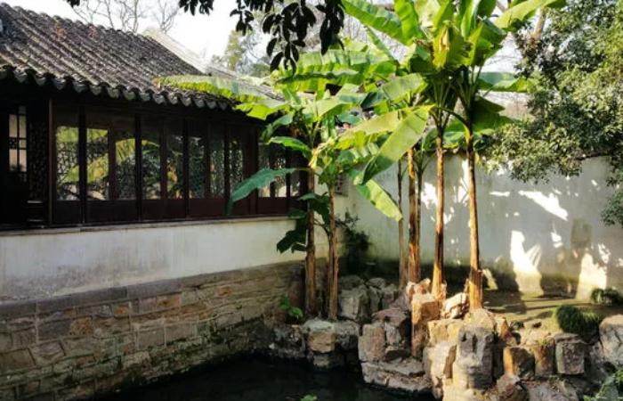 中国园林艺术,古代文青喜欢在院子里种什么?