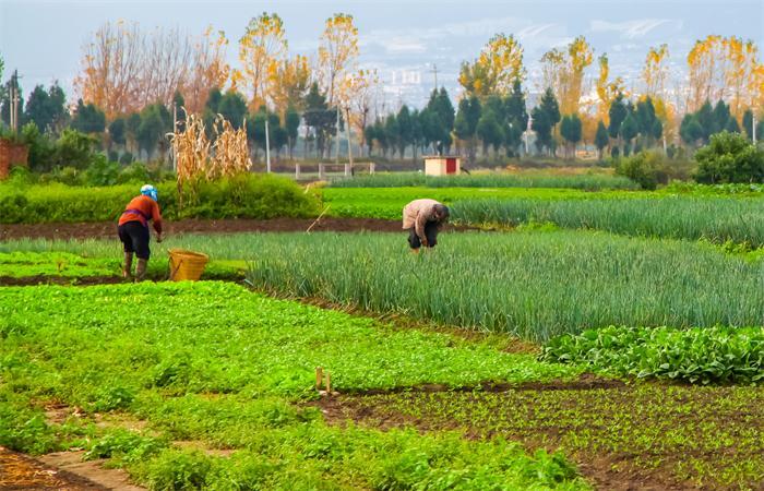 守住传统农耕文化的精魂