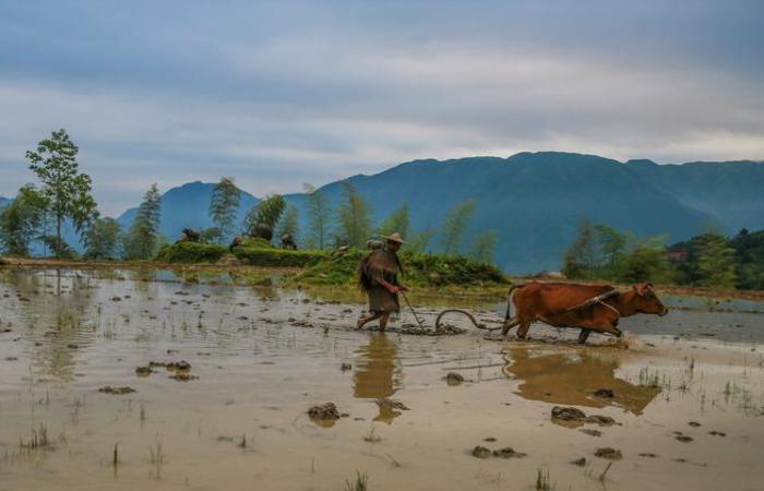 浅谈中国农耕文化中的古代农学思想