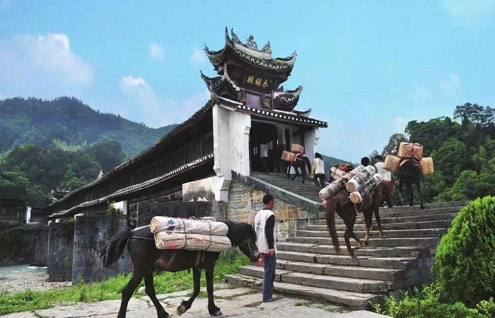 西南茶马古道:汉藏交融的千年大通道