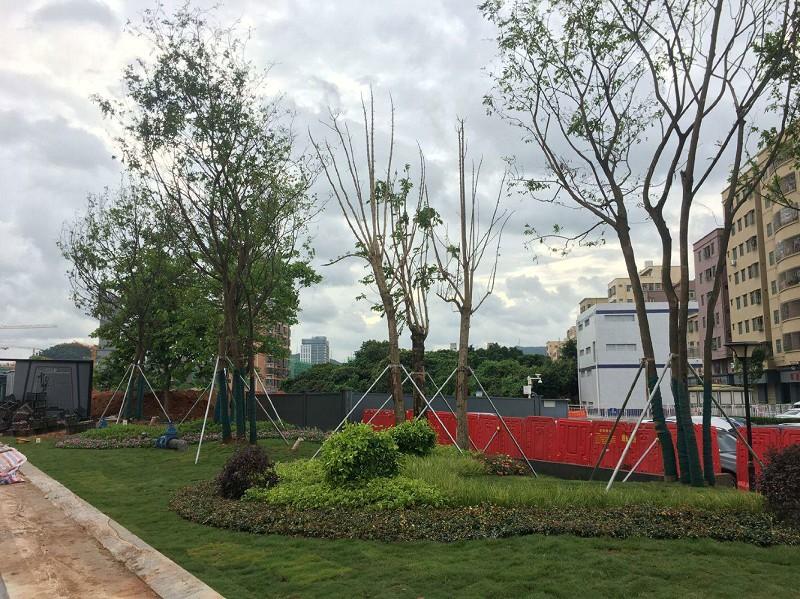 深圳市政绿化设计项目案例