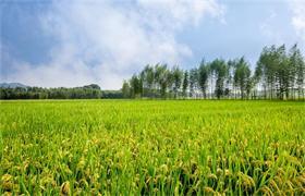 健康农业——新时代农业发展新方向