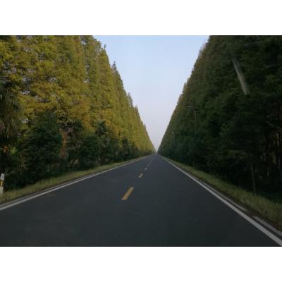 弶港镇花林路南侧游步道工程招标公告