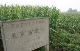 """""""华夏第一石磨盘"""":周口农耕文化发祥地的实物见证"""