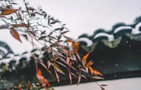 中国古典园林中的经典植物组合