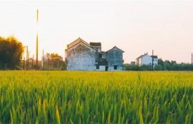 乡村振兴战略迈入有法可依新阶段