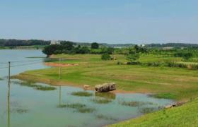如何带动乡村产业发展快速实现乡村振兴?
