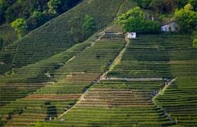 现代化进程中农耕文化的传承与创新
