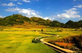 乡村振兴谱新篇——多地加速推进农业现代化