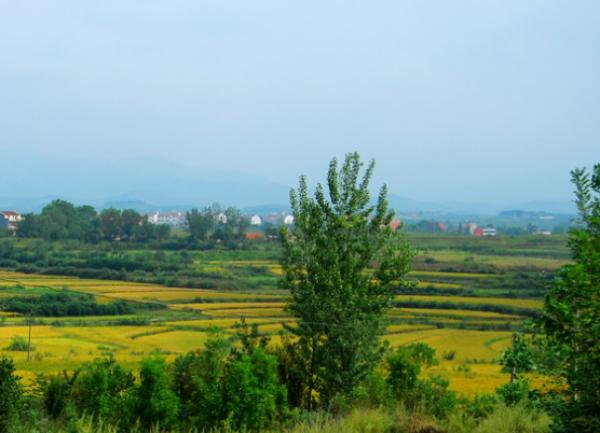 激发乡村振兴发展动能的路径选择