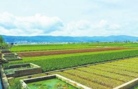大多数中国农村发展的底气有哪些?