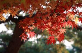 今日秋分︱秋色平分,正是一年最美时!